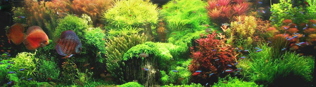 Aquatic Plants - New Zealand's Best Online Aquatic Plants Store!