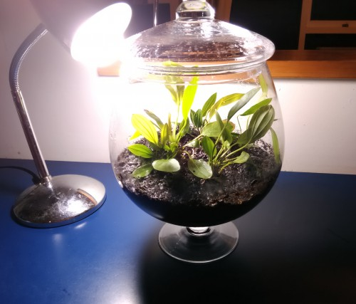 Terrarium Aquatic Plants